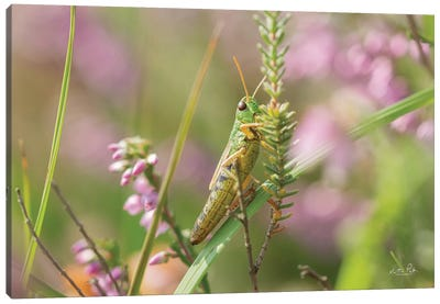 Grasshopper Canvas Art Print