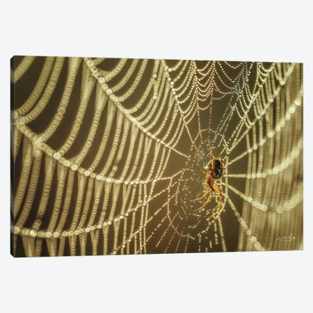 The Spider And Her Jewels Canvas Print #MPO158} by Martin Podt Canvas Print