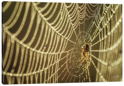 The Spider And Her Jewels Canvas Art Print