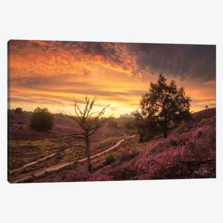 Dead Tree at Sunset Canvas Print #MPO163} by Martin Podt Canvas Wall Art