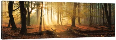Speulderbos Panorama Canvas Art Print