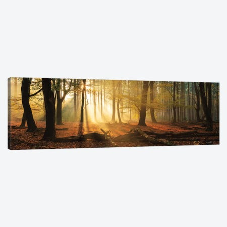 Speulderbos Panorama Canvas Print #MPO169} by Martin Podt Canvas Art
