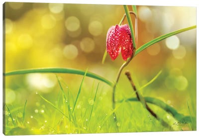 Fritillaria Canvas Art Print