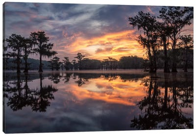 Sunrise in the Swamps Canvas Art Print
