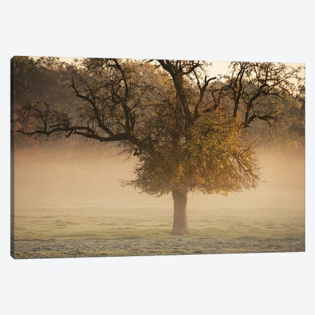 The Funny One Canvas Print #MPO172} by Martin Podt Canvas Print