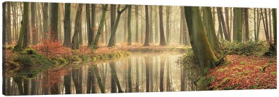 The Healing Power Of Forests Canvas Art Print