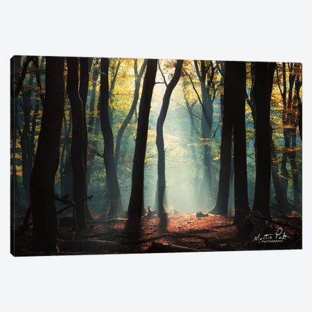 Forest Blues Canvas Print #MPO183} by Martin Podt Canvas Artwork