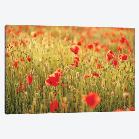 Poppy Field I Canvas Print #MPO203} by Martin Podt Canvas Print