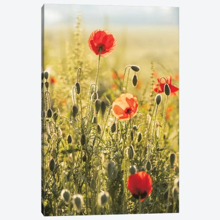 Poppy Field II Canvas Print #MPO204} by Martin Podt Canvas Artwork