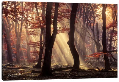 It's Raining Sunrays Canvas Art Print