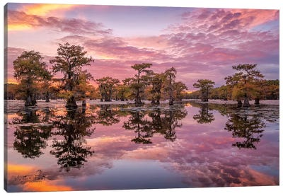 Magnificent Sunset in the Swamps Canvas Art Print