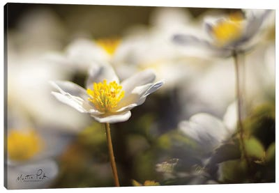 Anemone Up Close Canvas Art Print