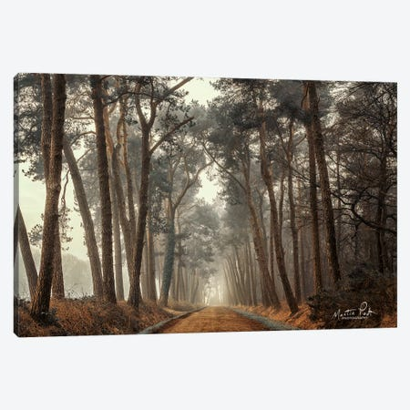 Path of Pines Canvas Print #MPO32} by Martin Podt Canvas Art Print
