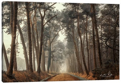 Path of Pines Canvas Art Print