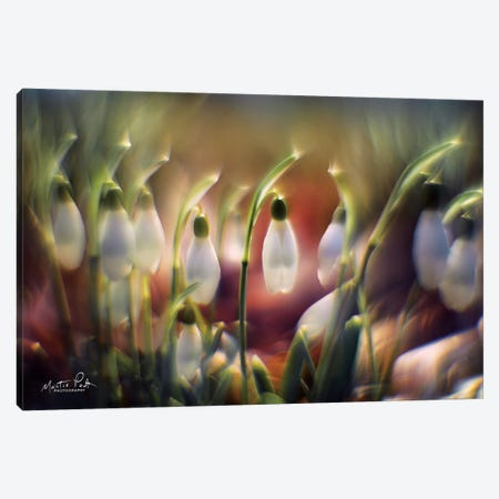 Snowdrops Canvas Print #MPO35} by Martin Podt Canvas Artwork