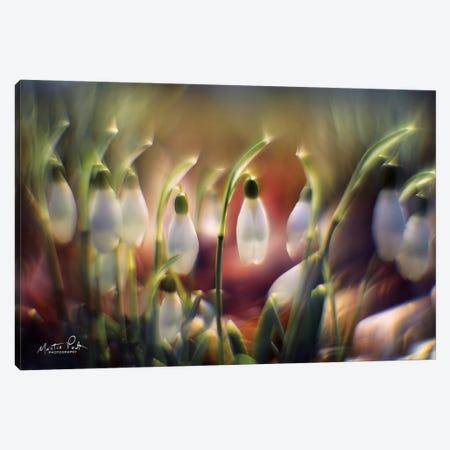 Snowdrops 3-Piece Canvas #MPO35} by Martin Podt Canvas Artwork