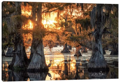 Sunset in the Swamps Canvas Art Print