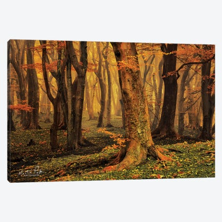 Sweet Dreams Canvas Print #MPO38} by Martin Podt Canvas Print