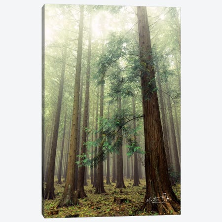 The Friendly Giants Canvas Print #MPO43} by Martin Podt Canvas Art