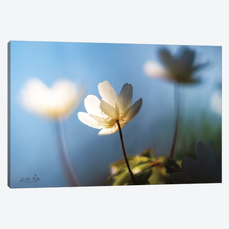Anemones in Blue Canvas Print #MPO4} by Martin Podt Canvas Art