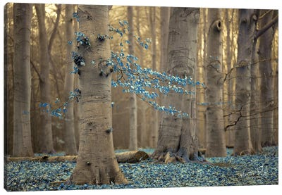 Winter Blues Canvas Art Print