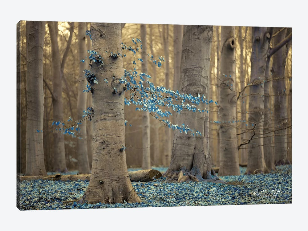 Winter Blues by Martin Podt 1-piece Canvas Wall Art