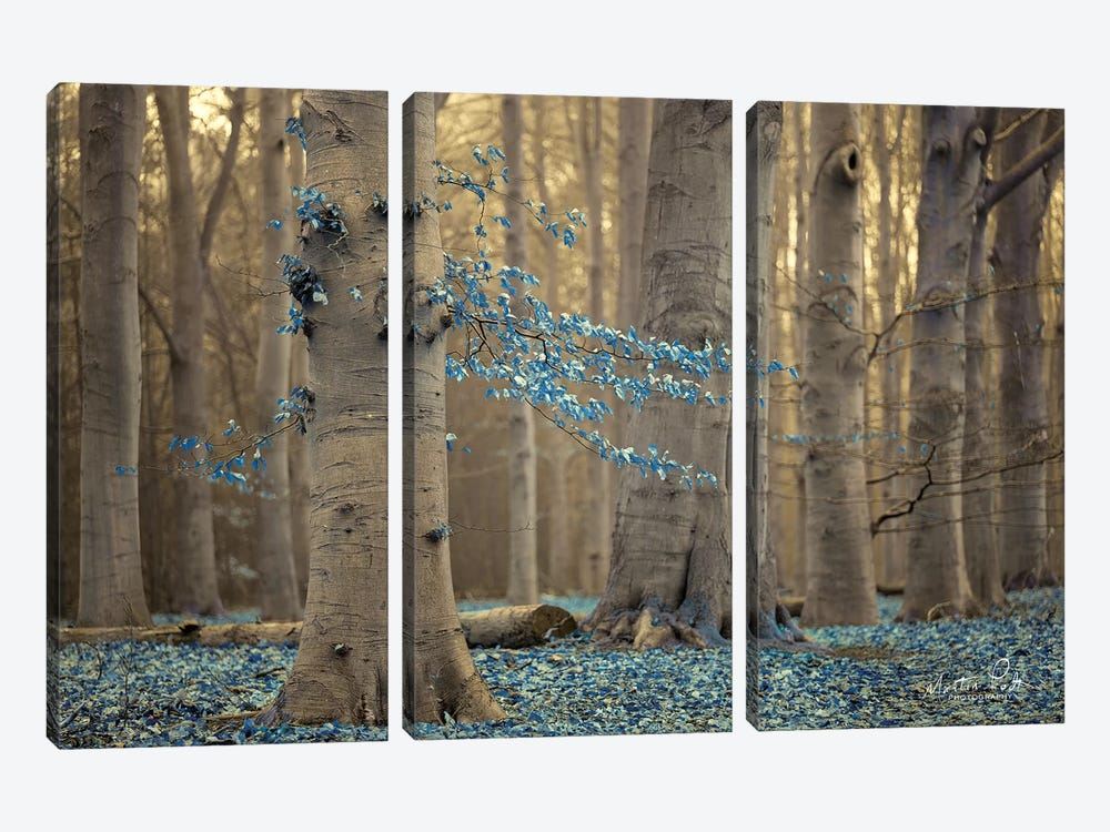 Winter Blues by Martin Podt 3-piece Canvas Wall Art