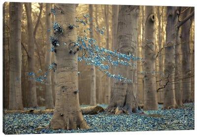 Winter Blues Canvas Art Print