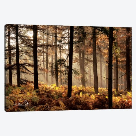 Fern Forest Canvas Print #MPO56} by Martin Podt Canvas Artwork