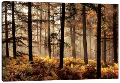 Fern Forest Canvas Art Print