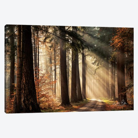 Fresh Autumn Light Canvas Print #MPO57} by Martin Podt Canvas Wall Art