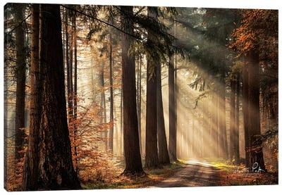Fresh Autumn Light Canvas Art Print
