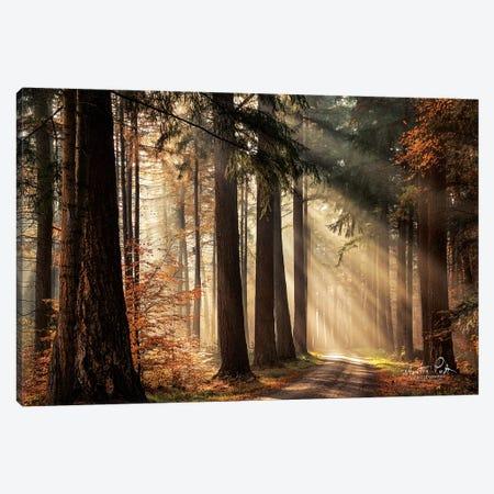Fresh Autumn Light Canvas Print #MPO57} by Martin Podt Canvas Wall Art