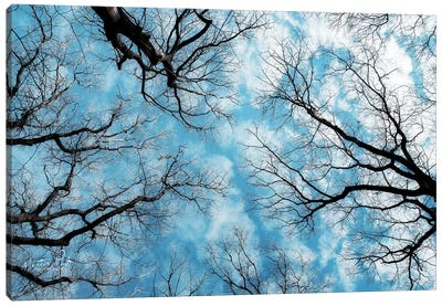 Reaching for the Sky Canvas Art Print