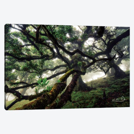 Tentacles Canvas Print #MPO64} by Martin Podt Canvas Art Print