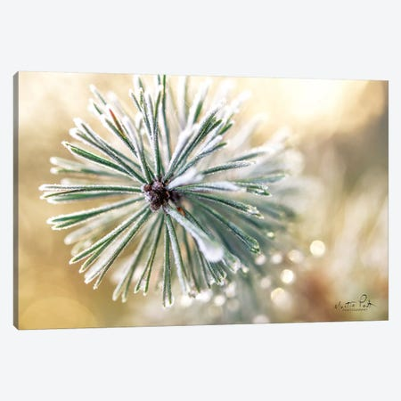 Winter Details Canvas Print #MPO70} by Martin Podt Canvas Print