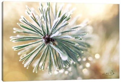 Winter Details Canvas Art Print