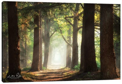 Fresh Green Forest Canvas Art Print