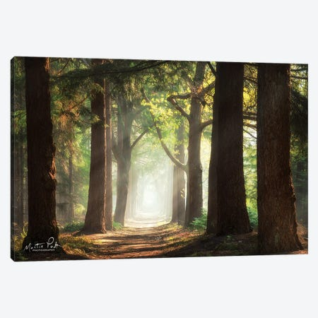 Fresh Green Forest 3-Piece Canvas #MPO72} by Martin Podt Canvas Art Print