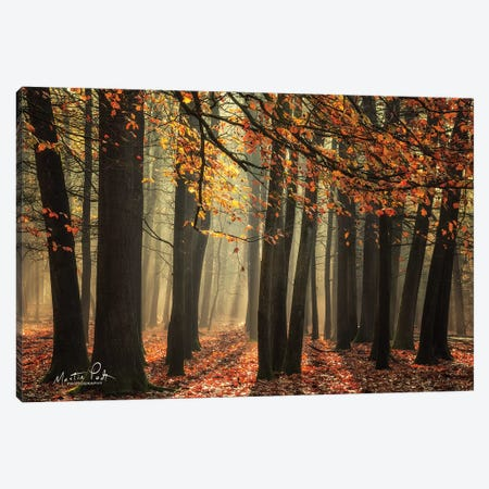 Bunch of Trees Canvas Print #MPO73} by Martin Podt Canvas Art Print