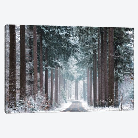 Pines in Winter Dress Canvas Print #MPO78} by Martin Podt Art Print