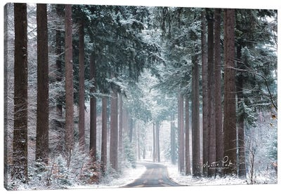 Pines in Winter Dress Canvas Art Print