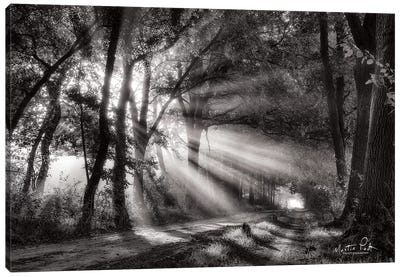 Black and White Rays Canvas Art Print