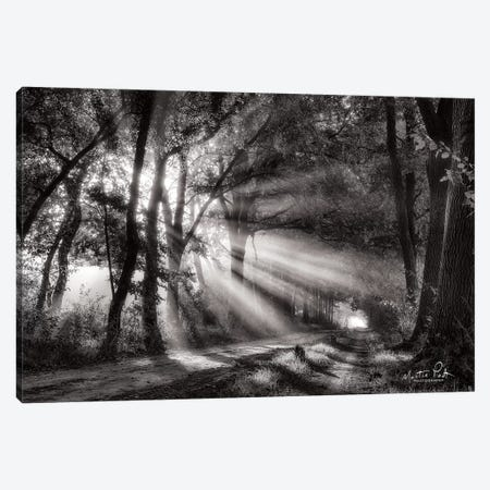 Black and White Rays Canvas Print #MPO8} by Martin Podt Canvas Print