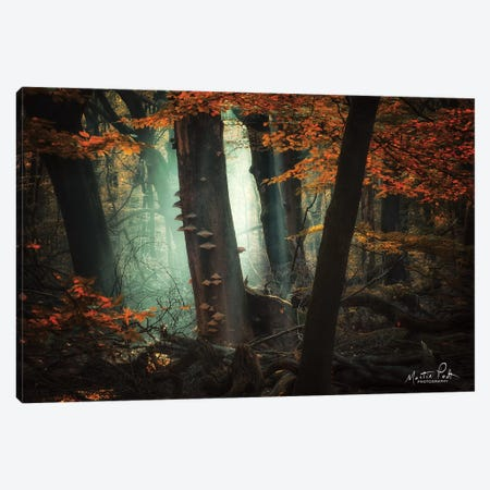 Beautiful Mess Canvas Print #MPO90} by Martin Podt Canvas Print