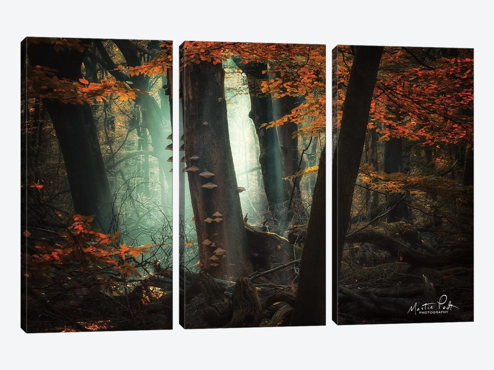 Beautiful Mess by Martin Podt 3-piece Canvas Artwork