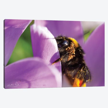 Bee II Canvas Print #MPO92} by Martin Podt Art Print