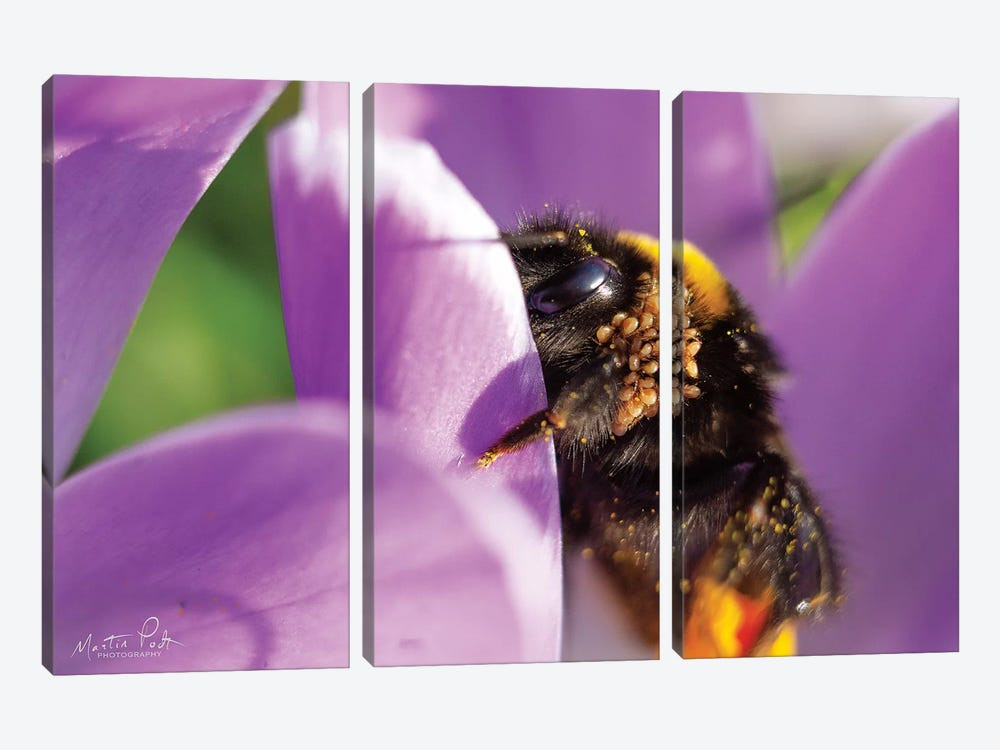 Bee II by Martin Podt 3-piece Canvas Wall Art