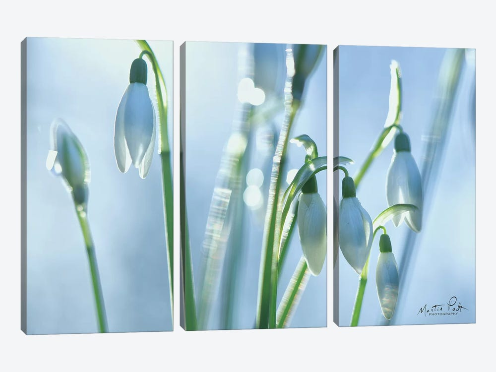 Couple of Snowdrops  by Martin Podt 3-piece Canvas Print