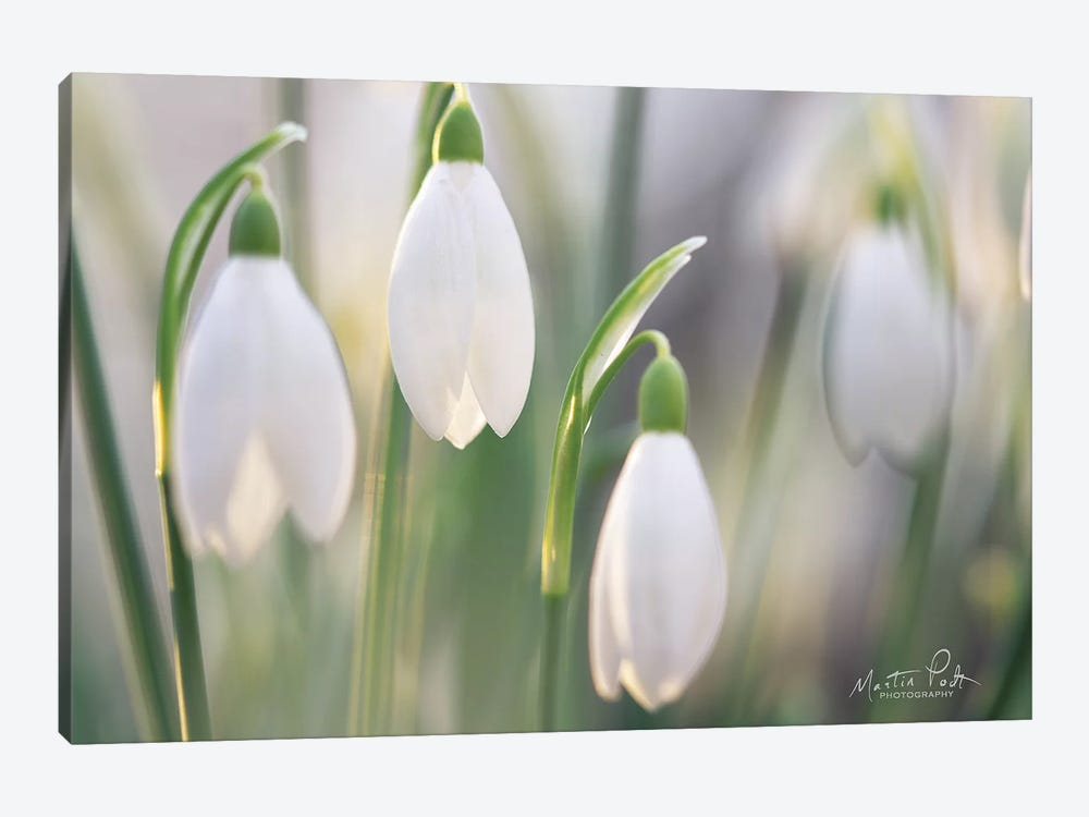 Delicate by Martin Podt 1-piece Canvas Wall Art